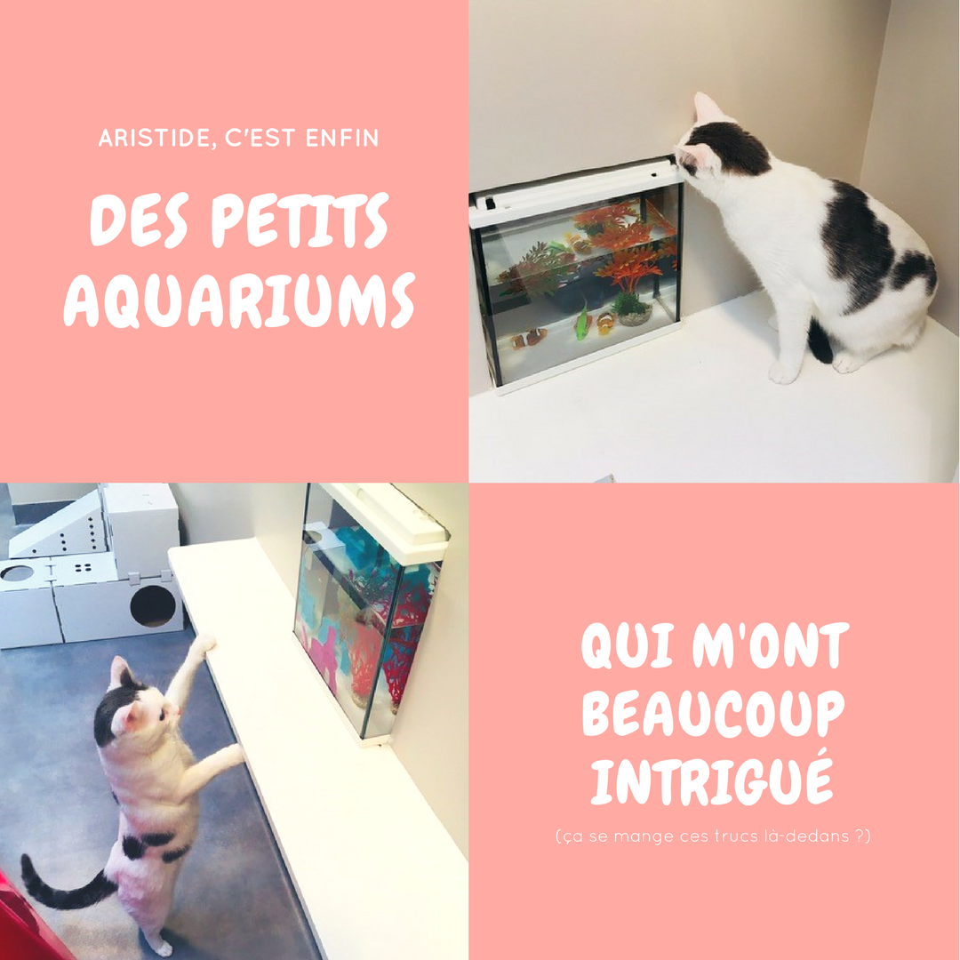 Blog Sophiesmoods Hotel Aristide pour chats
